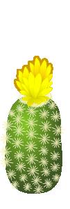 ナガマルサボテン 黄