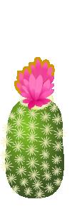 サボテン ピンク
