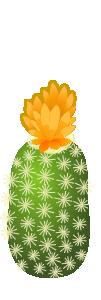 サボテン オレンジ
