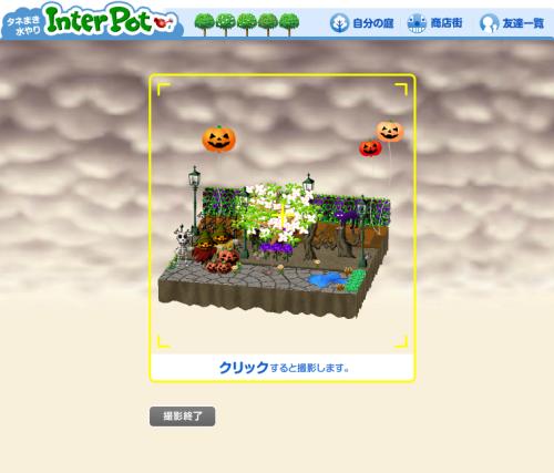 インターポットの撮影機能を使って庭を撮影します。