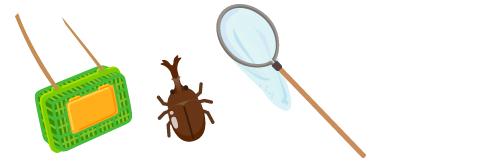 虫とりカゴ、カブトムシ、虫とり網
