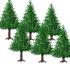 モミの木 3種6本