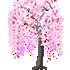 おばけしだれ桜