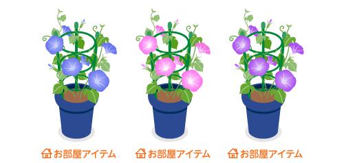 朝顔鉢植青・朝顔鉢植ピンク・朝顔鉢植紫