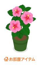 ハイビスカス鉢植ピンク