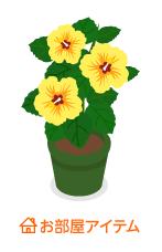 ハイビスカス鉢植黄