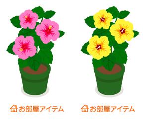 ハイビスカス鉢植ピンク・ハイビスカス鉢植黄