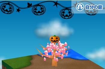 トップかぼちゃ
