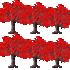 カエデの木 3種6本