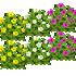 オシロイバナ 3種6本