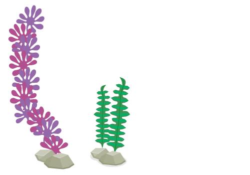 海藻レッド大・アクアプラント深緑