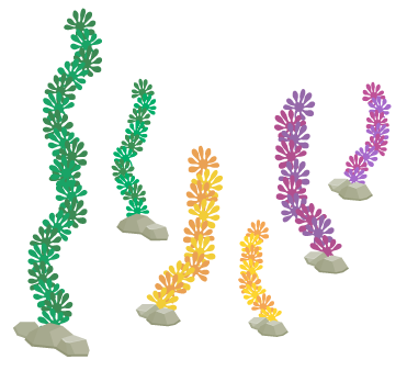 海藻グリーン大・海藻グリーン小・海藻レッド大・海藻レッド小・海藻イエロー大・海藻イエロー小