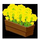菜の花プランター
