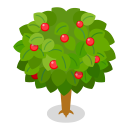 リーフツリー若草緑 実