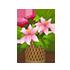 花籠B 大 ピンク