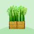 竹の壁(大地)