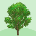 (大地用)ポプラの木B