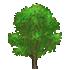 (庭用)ポプラの木B