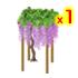 藤棚 紫1個