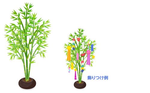 七夕の笹竹