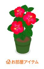 ハイビスカス鉢植赤