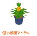 パイナップル鉢植