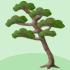 でか松の木B