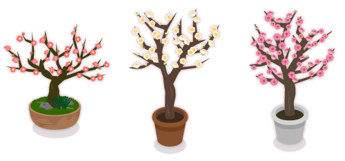 鉢植梅の花紅・鉢植梅の花白・鉢植梅の花八重紅