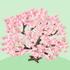 上から見た桜の木