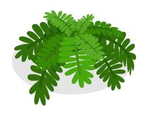 古代植物シダ小