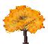 光るカエデの木 橙