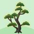 光る松の木A