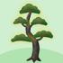 光る松の木B