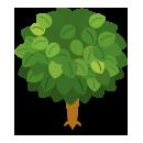 リーフツリー草緑