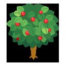 リーフツリー緑 実