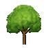マカダミアの木