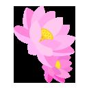 花かんざし蓮