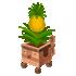 ゴンスプランター パイナップル