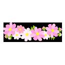 コスモスの花冠